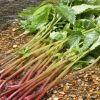 みずは山菜の王様です!みずの秘密を知って美味しく食べよう!のサムネイル画像