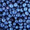 果物の中では抗酸化作用はトップクラス!ブルーベリーの効果とは?!のサムネイル画像
