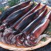 イカの驚くべきパワー!イカの秘密を栄養素からカロリーまで徹底分析のサムネイル画像