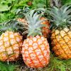 誰でも簡単に出来る!パイナップルの葉っぱの取り方と切り方!のサムネイル画像