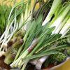 自然の恵み美味しい山菜を食べよう。山菜の種類をご紹介します!のサムネイル画像