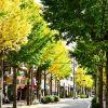 お昼はのんびりと!横浜市藤が丘で食べるおすすめイタリアンランチのサムネイル画像